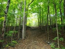 Mont Royal Path